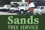 Coupon Offer: $100 OFF Tree Job